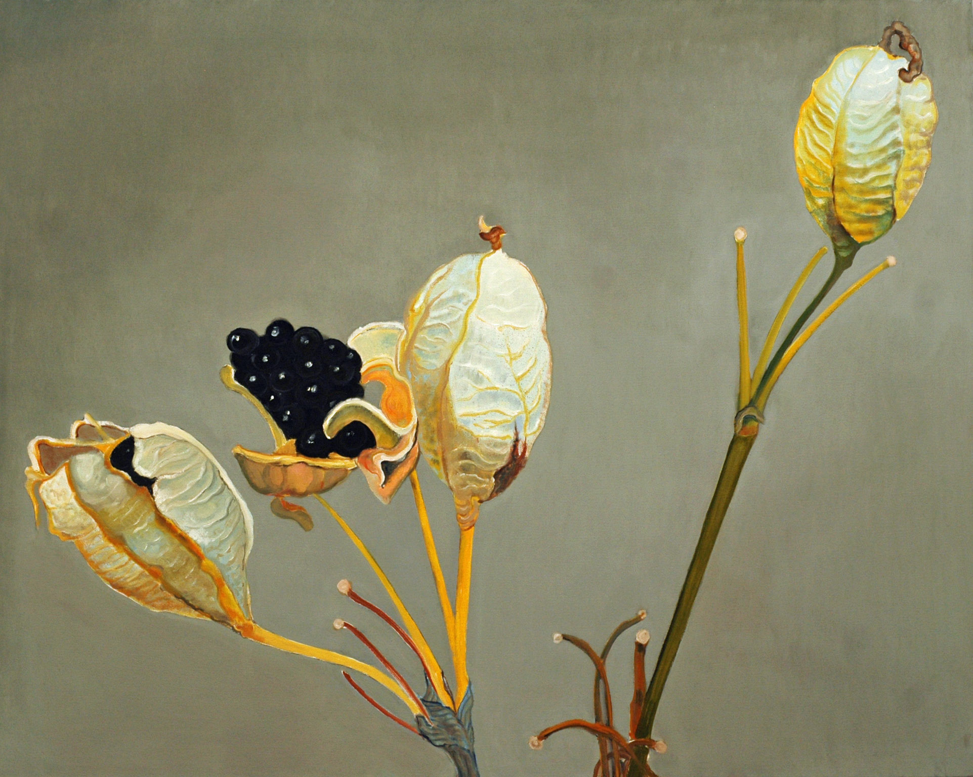 Blackberry Lily Seedpod 48x60 2013 web