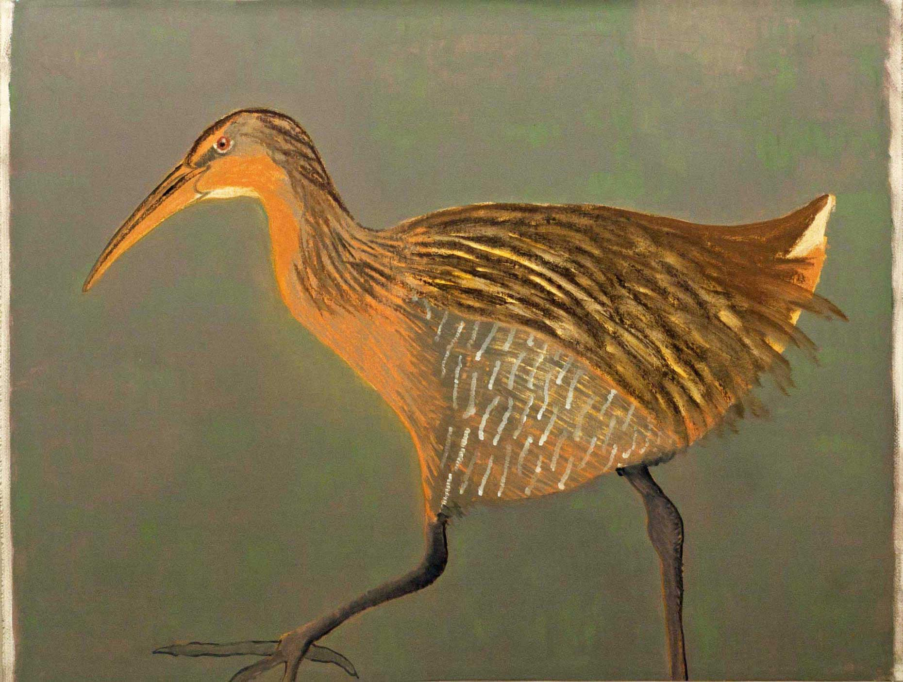 Clapper-Rail2-full-apx