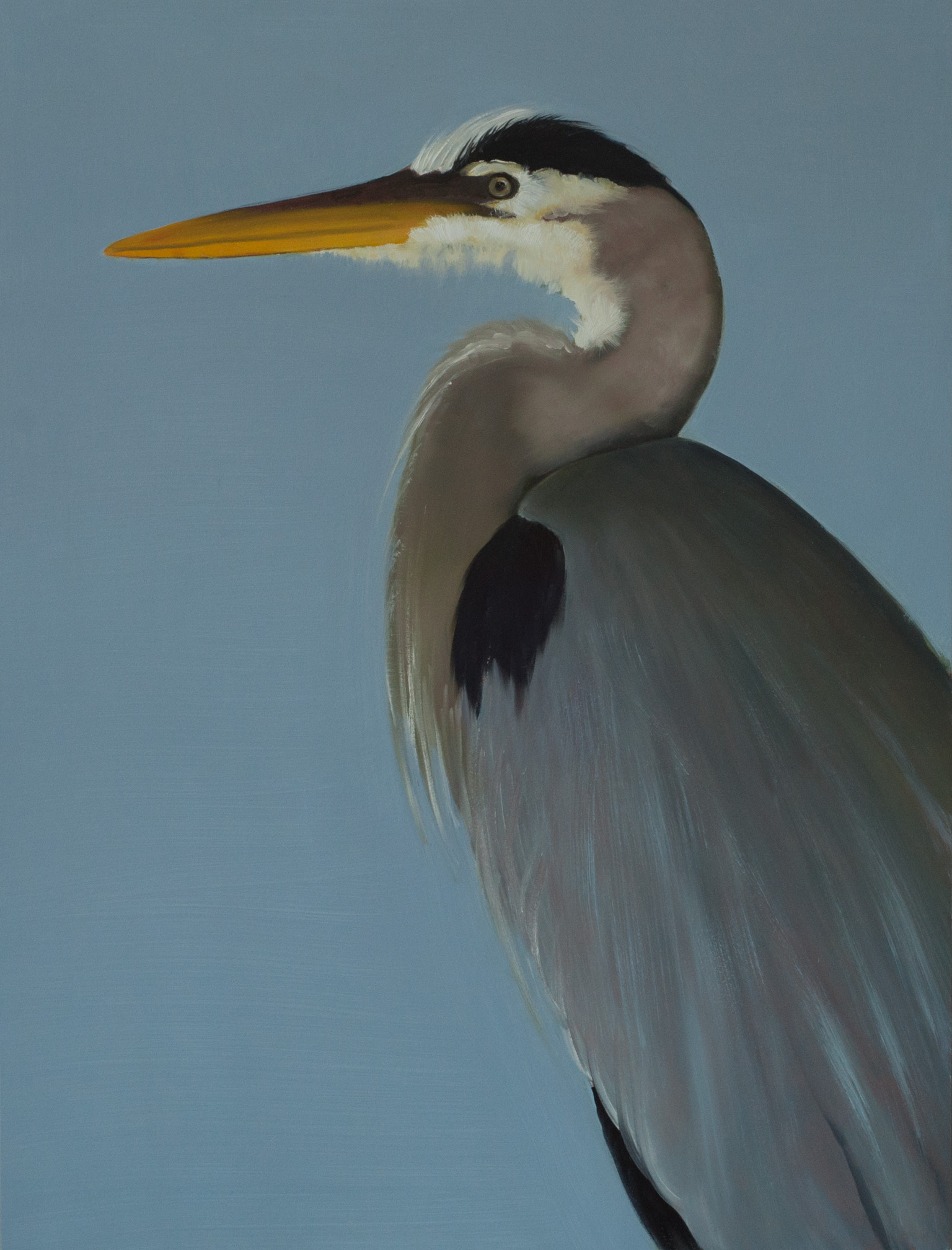 Great Blue Heron 40x30 (panel) web