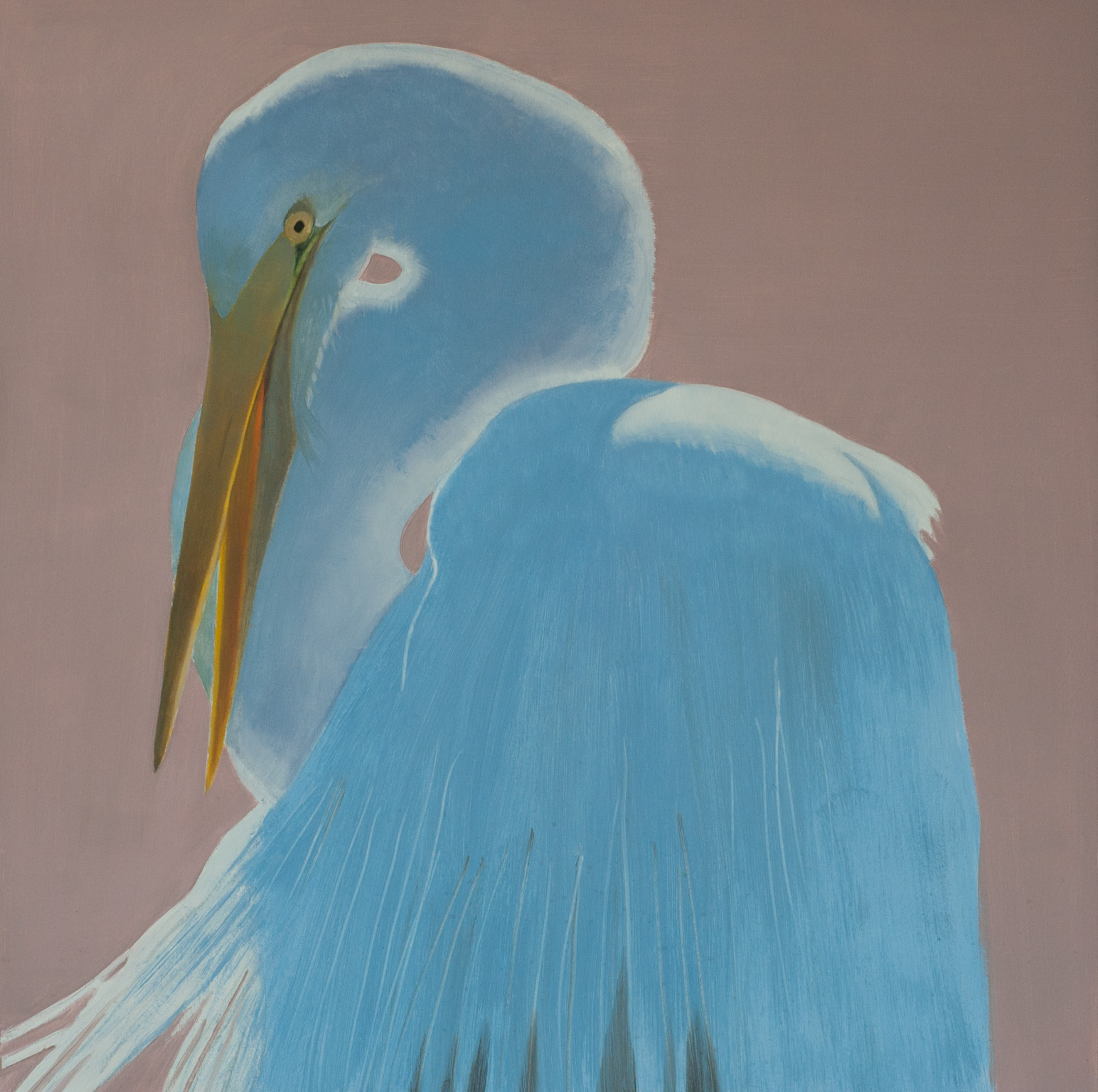 Great Egret Protrait 40x40 panel 2017 web