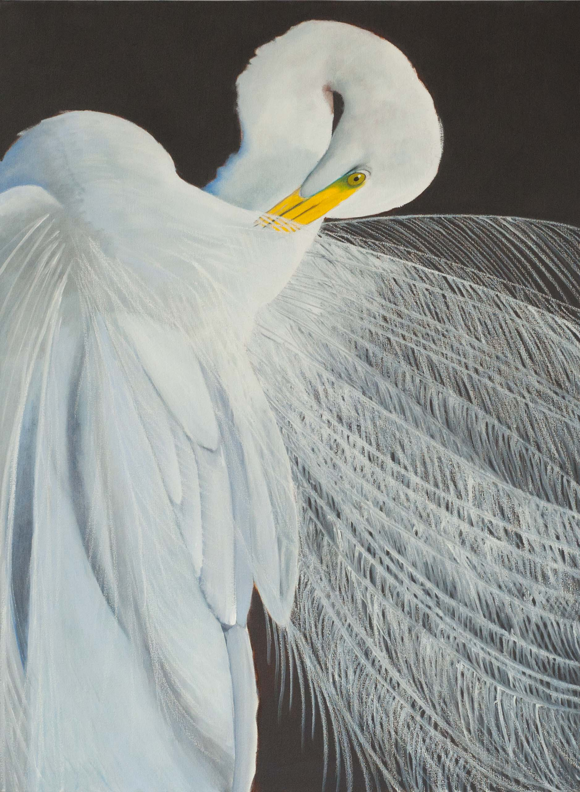 GreatEgret3InMatingPlumage48x3620172