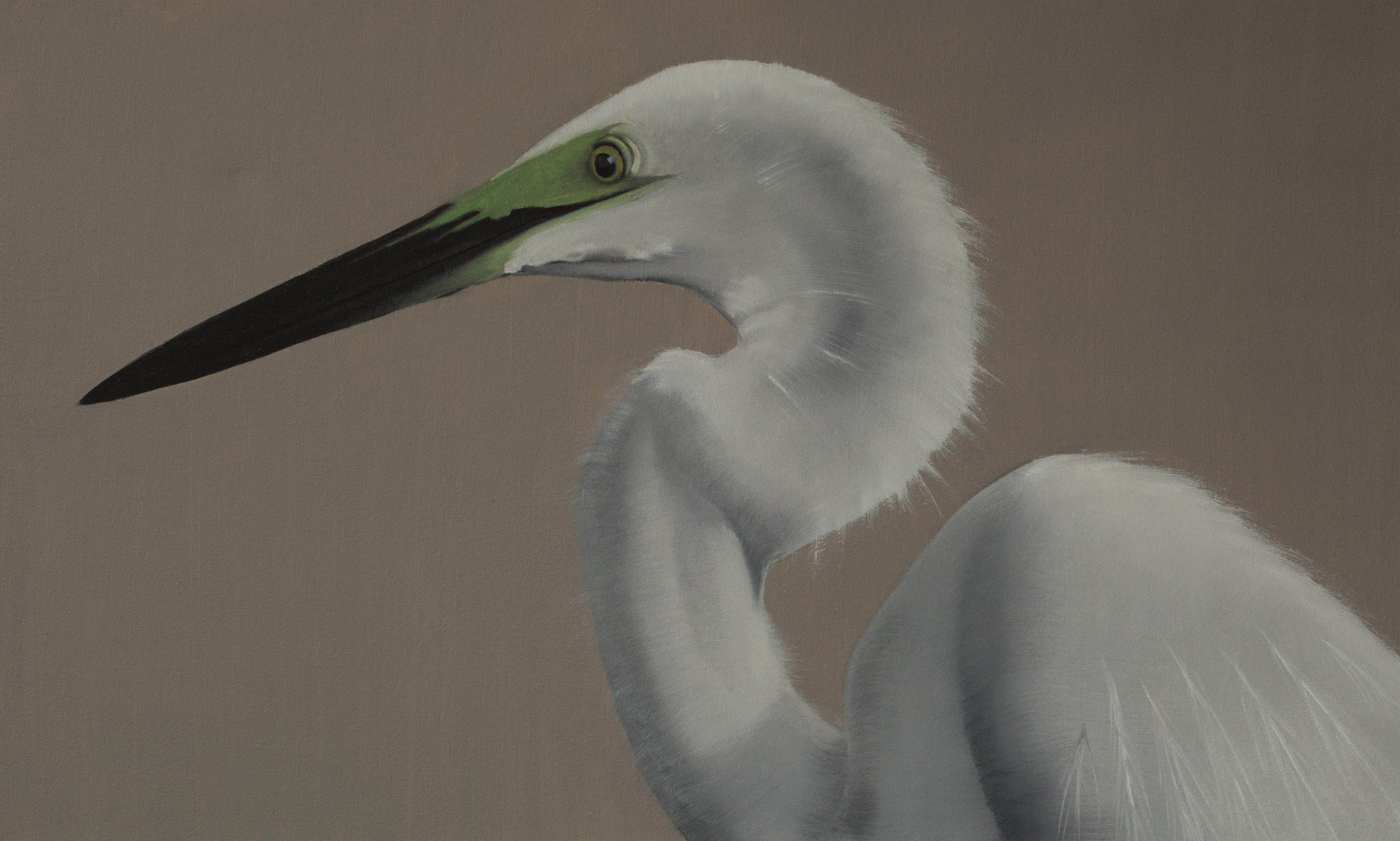 Protrait The Great Egret 24x40 2017web