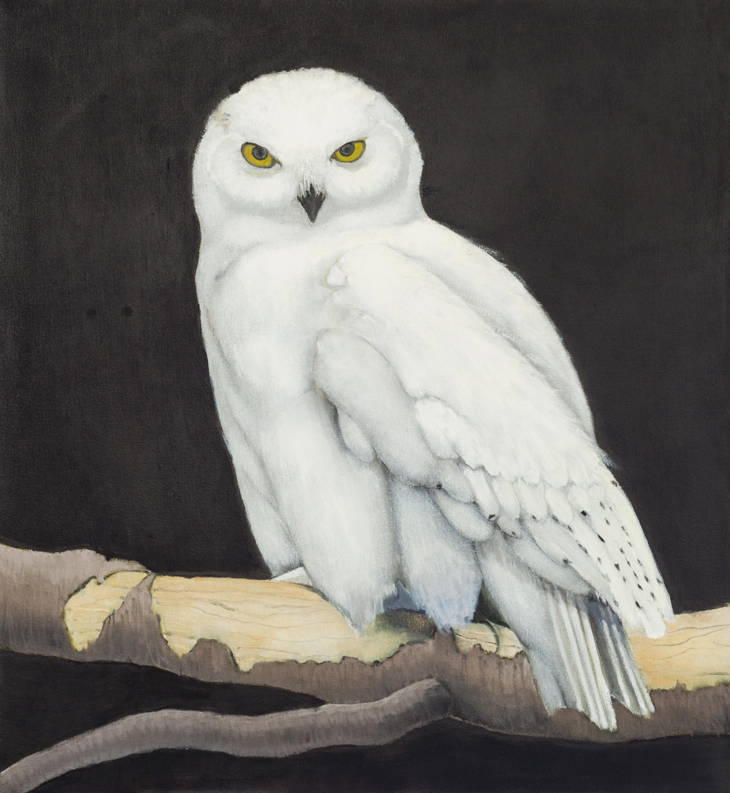 Snowy Owl - 36x30 - Oil on canvas - 2015 - web