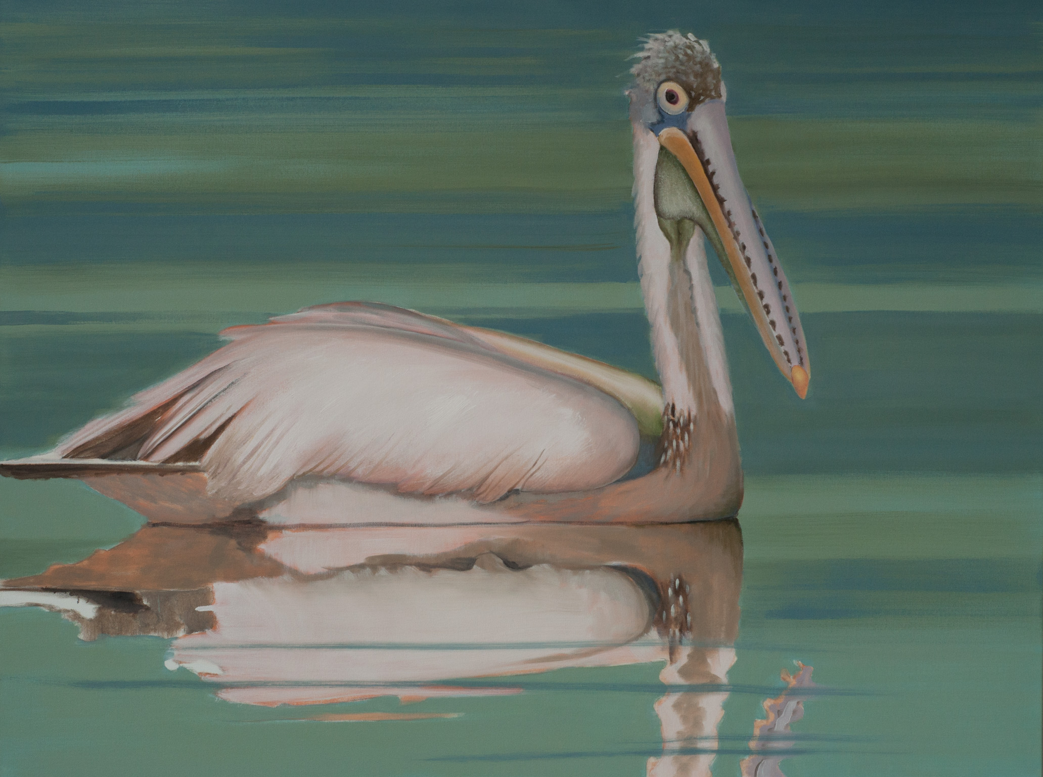 Spot-billed Pelican Beira Lake 1 36x48 web