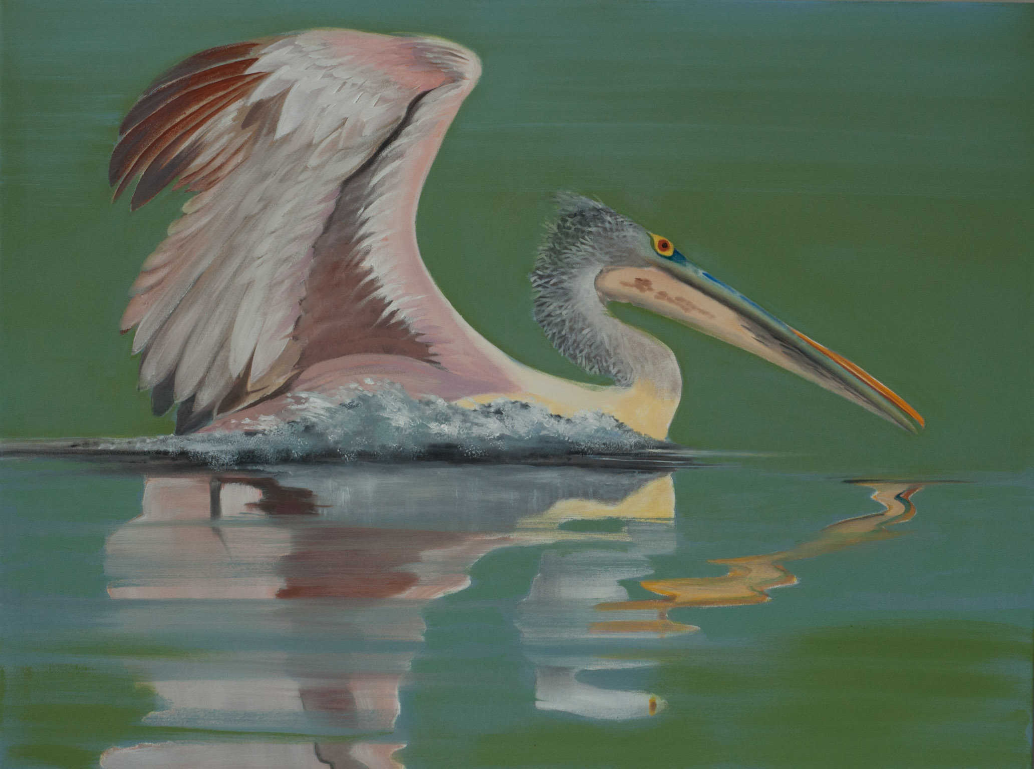 Spot-billed Pelican Beira Lake 2 36x48 web