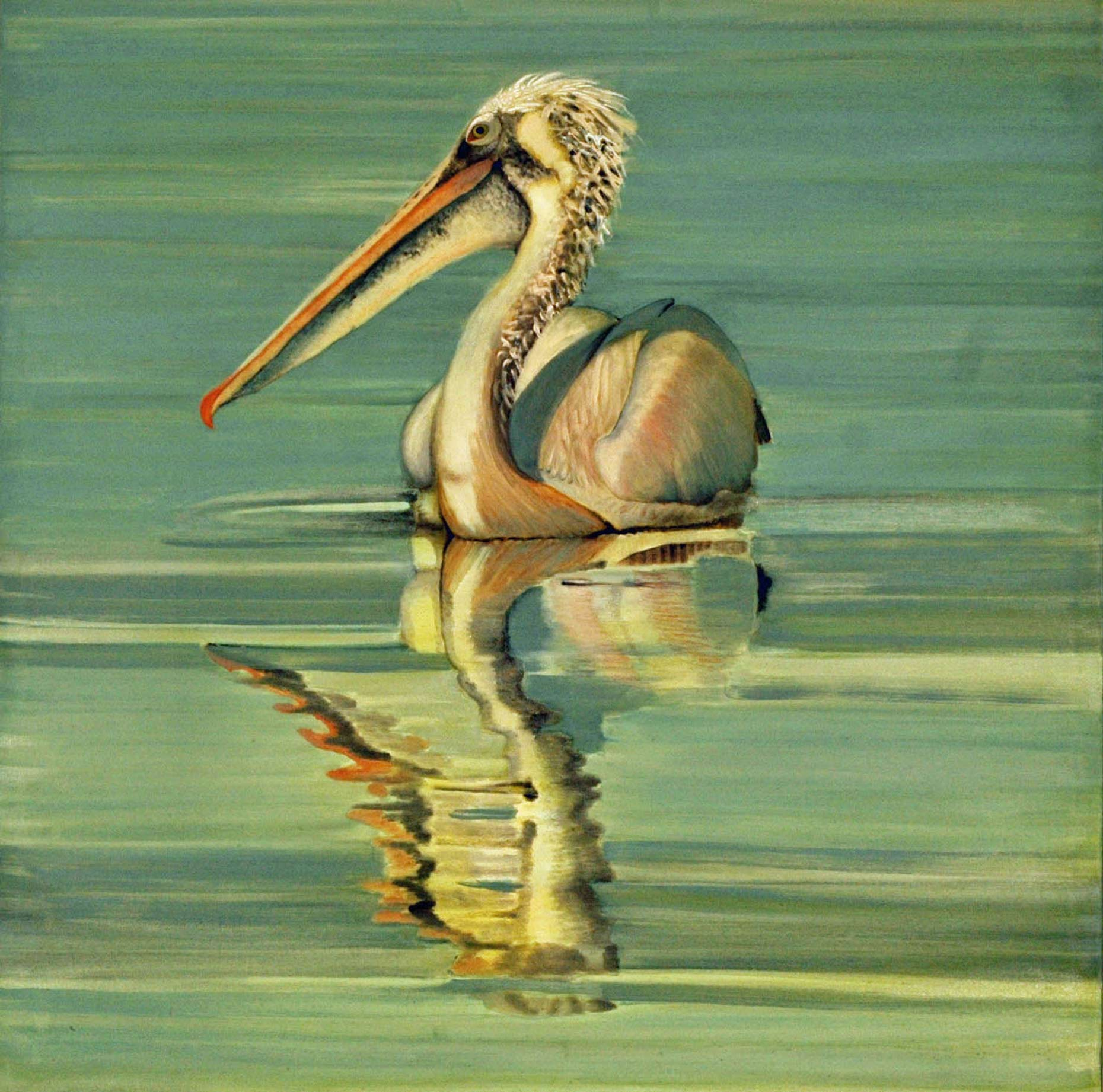 Spot-billed-Pelican1-full-apx