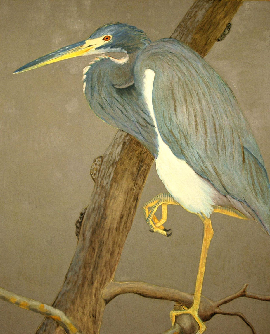 Tricolored-Heron1-full-apx